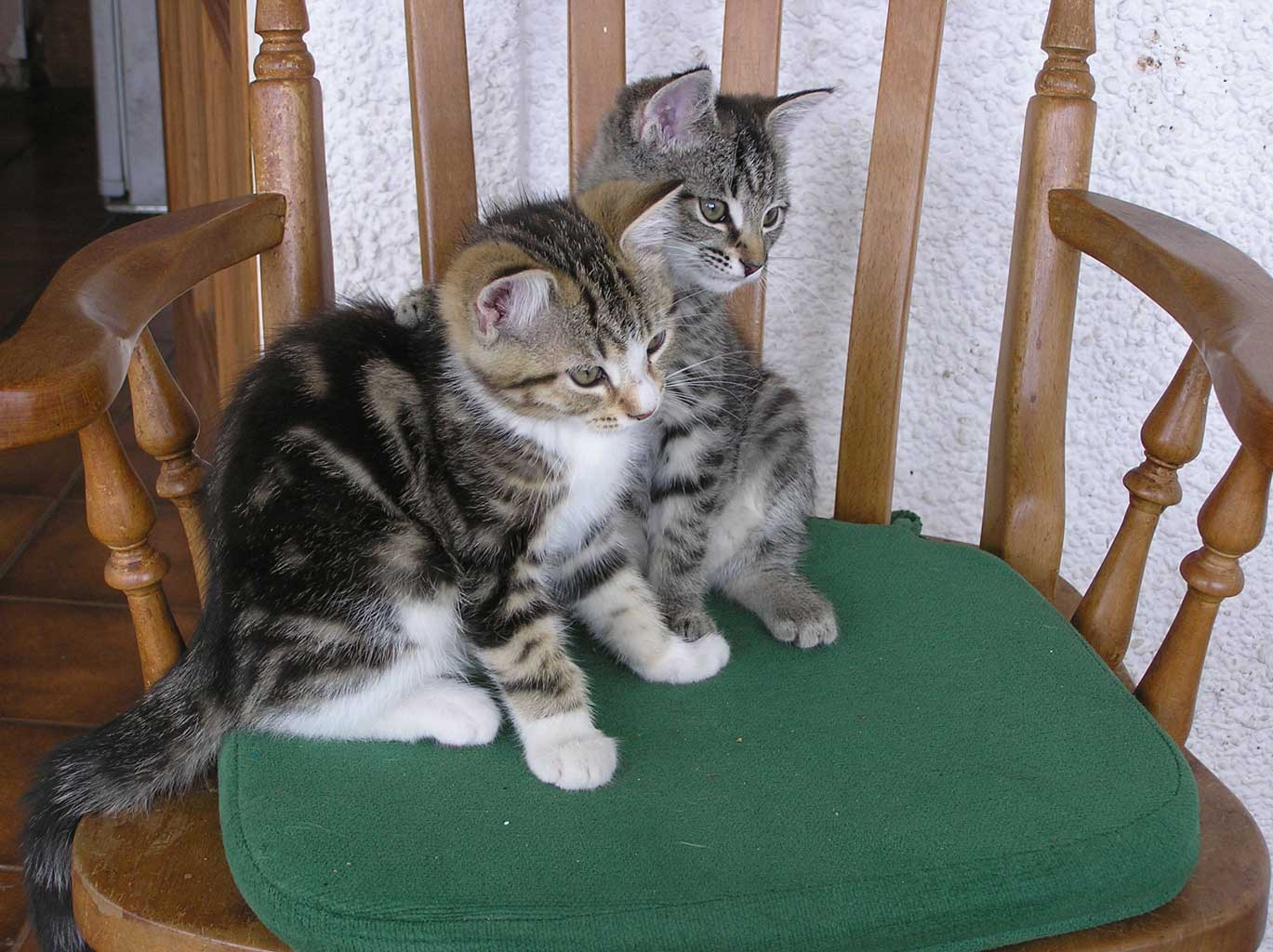 Lizzie and Monk (as kittens)