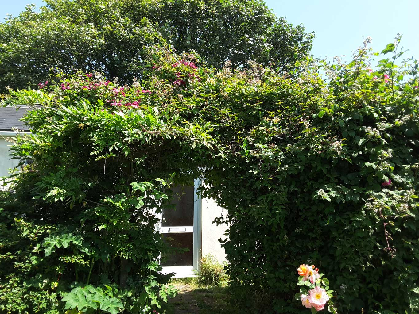 Front door behind wisteria and clematis arch
